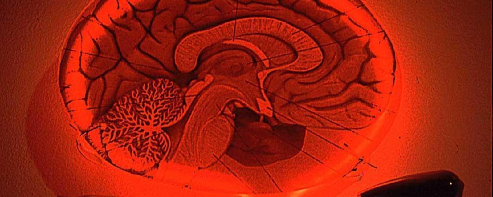 心灵超能力:你若看到大脑变化 可让你忘掉疼痛
