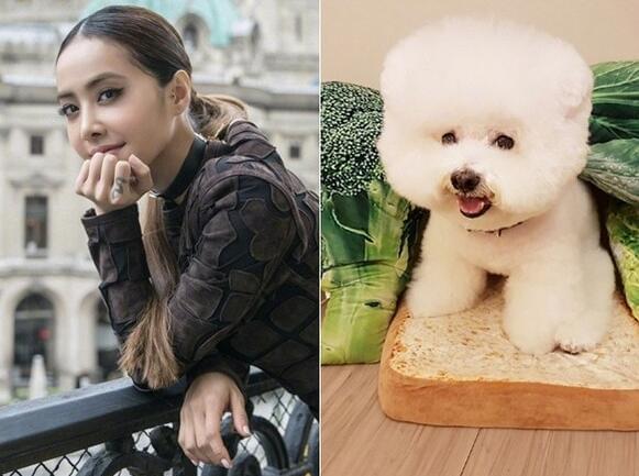 蔡依林与其爱犬