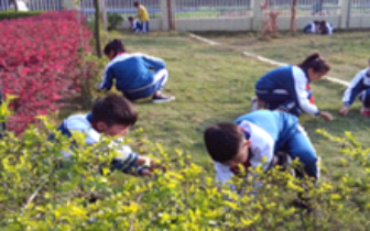"""""""爱护环境,美化校园""""——小学开展植树护绿活动"""