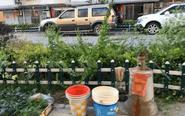 姜堰马厂小区居民私自打水井 绿化变菜园