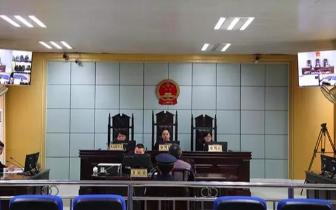 防城港上思县一男子涉嫌滥伐林木罪出庭受审!