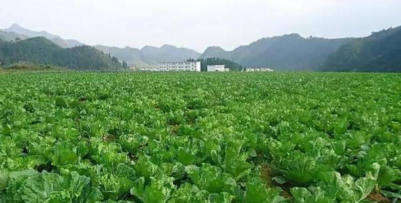 河北省15个村镇入选全国示范村镇