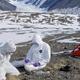 南极是微生物研究绝佳地点