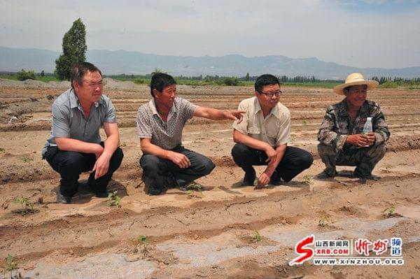 代县徐村23户贫困户靠种植构树精准脱贫
