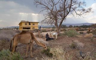 骆驼换皮卡 像祖先一样生活的贝都因人