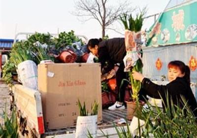 睢县:购买花卉装扮生活成时尚