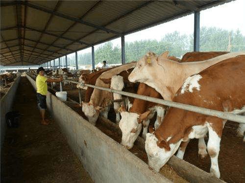 【撸起袖子加油干】全区各类农牧业专业合作社达到7.77