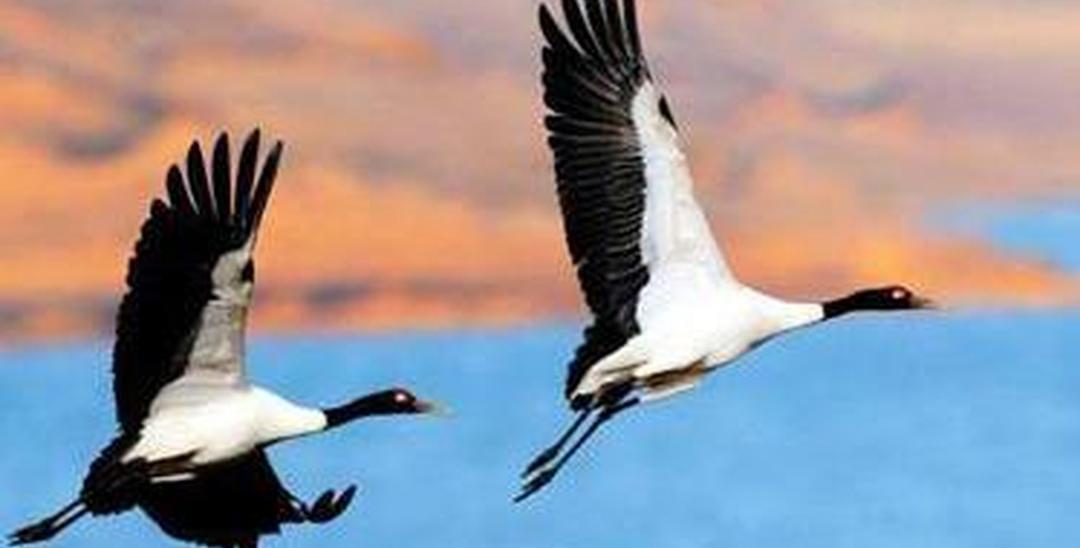 """东坡区强化""""四个到位"""" 全力为候鸟迁徙护航"""