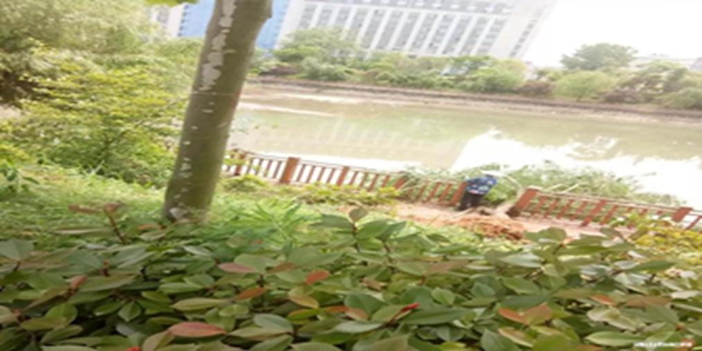 通山新城河堤近百米树木被连根挖起为啥?