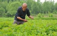 退休伐木工30年植树18万株