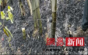 九宫山首起非法狩猎还引起山火案正式立案起诉