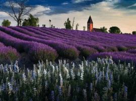 泰州10所农园入选江苏百个主题创意农园大名单