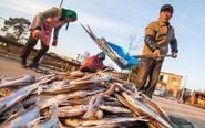 渔民冬至晒鱼:鲜鱼变咸鱼
