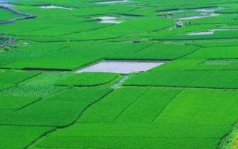上海首次推出土地进行农业招商