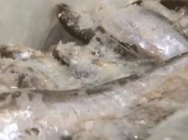 旅客从韩国携150公斤冰鲜鱼入境 被罚款列黑名单