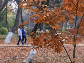 秋意渐浓温度骤降 19日吉林省多地有降雨
