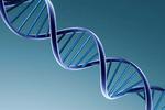 研究人员发现6种糖尿病基因