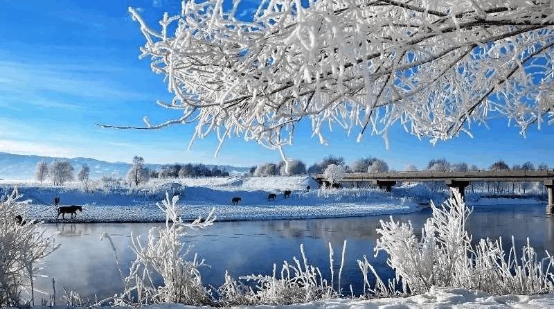 冬天的新源 好像误入了童话世界