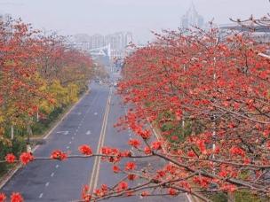 全免费!广州这些美翻了的看花景点坐地铁就能到!
