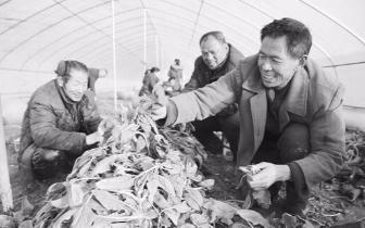 陕州区西李村乡:带领农民致富奔小康