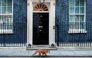 狐狸走过英国首相府门口