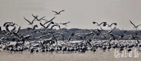 河北:湿地保护终身追责 禁止擅自征用重要湿地
