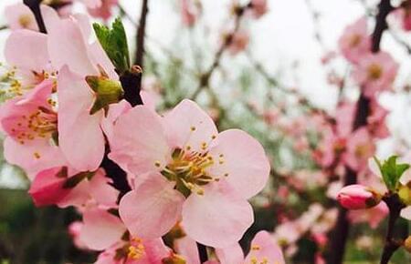 天地变化新芽生  畅游清明上河园不负春光