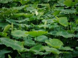 端午节期间大同朔州等地有雨 全省气温降低