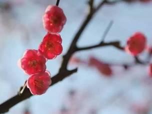 【椒江赏花手册】迎着花开的方向,游访椒江