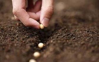 福建加快推进现代农作物种业发展实施意见出台