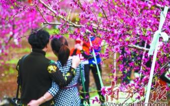 9万游客涌入连州 享受春季桃园花海旅游盛宴