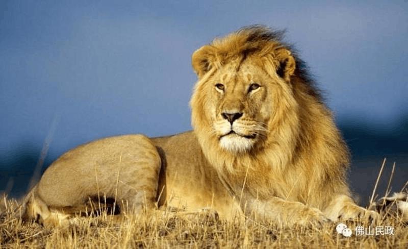 南海狮山为什么叫狮山?莫非真的有狮子?