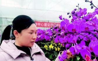 航天品种的蝴蝶兰苗开花了!惠州人可前往欣赏