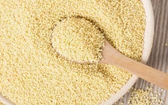 春天吃小米 除了养胃 原来功效这么多