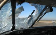 客机起飞遭老鹰野兔撞击