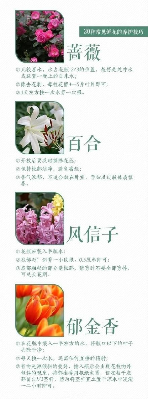 30种常见鲜花的养护方法