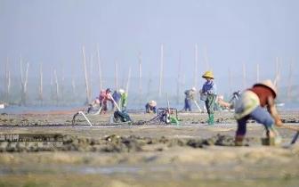 对这种灭绝性捕捞沙虫的行为 持续坚决地打击