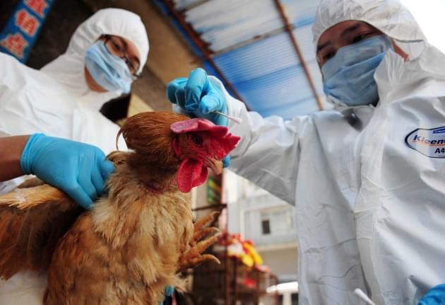 """为何会致人死亡?H7N9病毒""""凶猛""""原因被找到"""