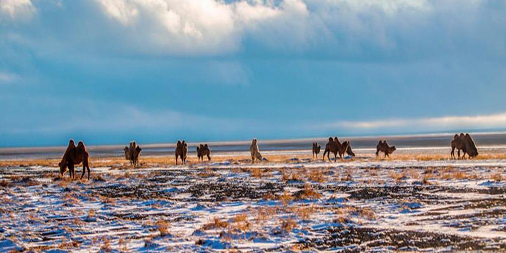 新疆托里雪景惊艳来袭 用最浪漫温暖你的冬