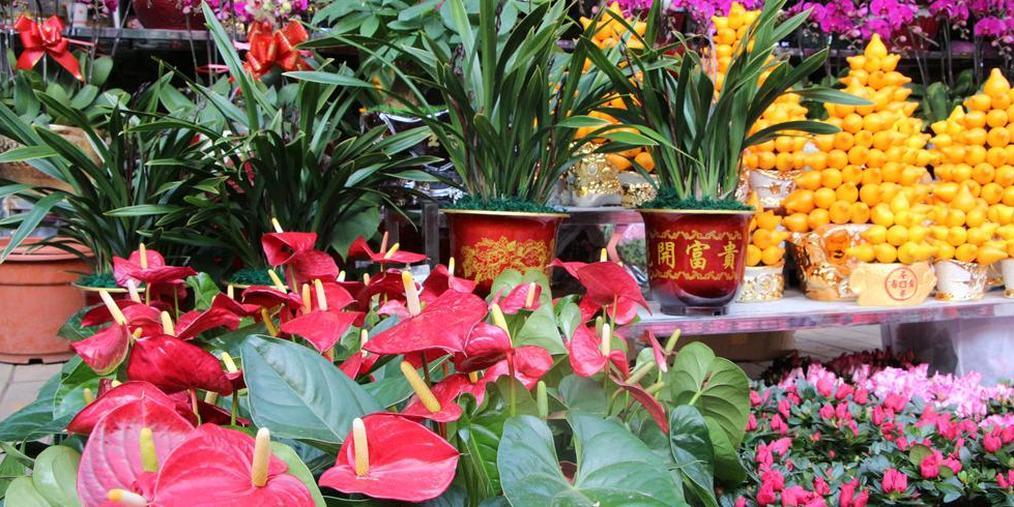 花市|繁花绚烂灿然 皆为新一年祝福祈愿