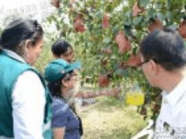 秘鲁农业部植物检疫专家团来运城市考察果品出口