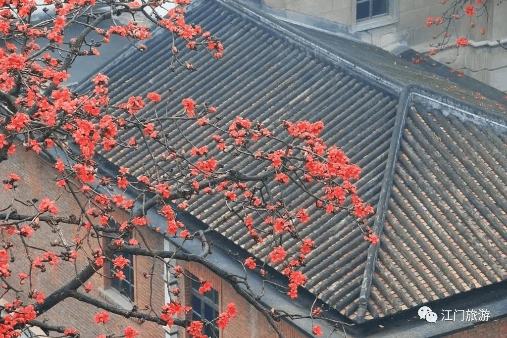 太惊艳了!江门竟有这么美的木棉花 是在你家附近么