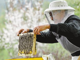 陕州区农牧局:邀请农科院专家为蜂农培训