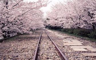 看世界 | 去关西赏樱,都需要知道些什么?