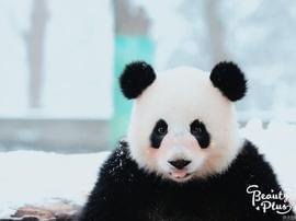 当动物遇上美颜相机