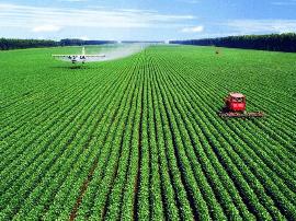 福建晋江市借力台湾团队发展现代农业