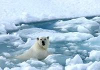 科学家:温室气体真会导致第六次生物大灭绝?