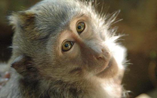 干细胞疗法恢复帕金森病猴神经功能 有望治疗人类