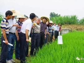 利用生态功能分子防控害虫及杂草 看看怎么做到的