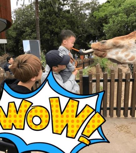 吴京一家三口动物园玩耍 儿子喂长颈鹿画面喜感